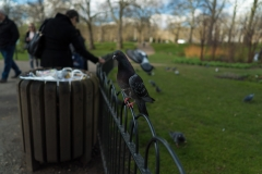Birds In The Park