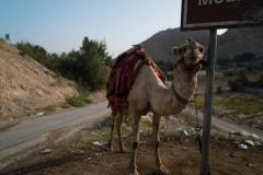 Temptation Mountain Camel Ride