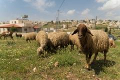 Bethlehem, Israel