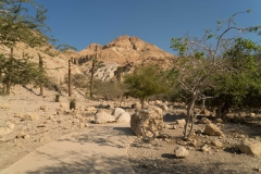 Where David Hid From King Saul
